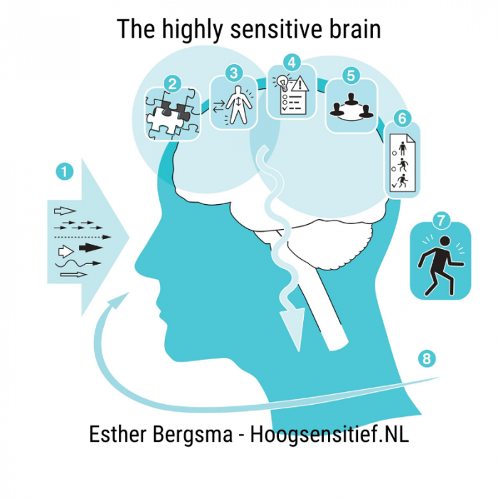 highly sensitive brain